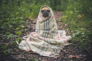 why, dog in blanket, changeless change, carol davis